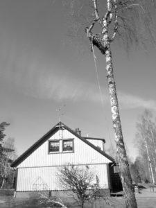 Klättrare i träd